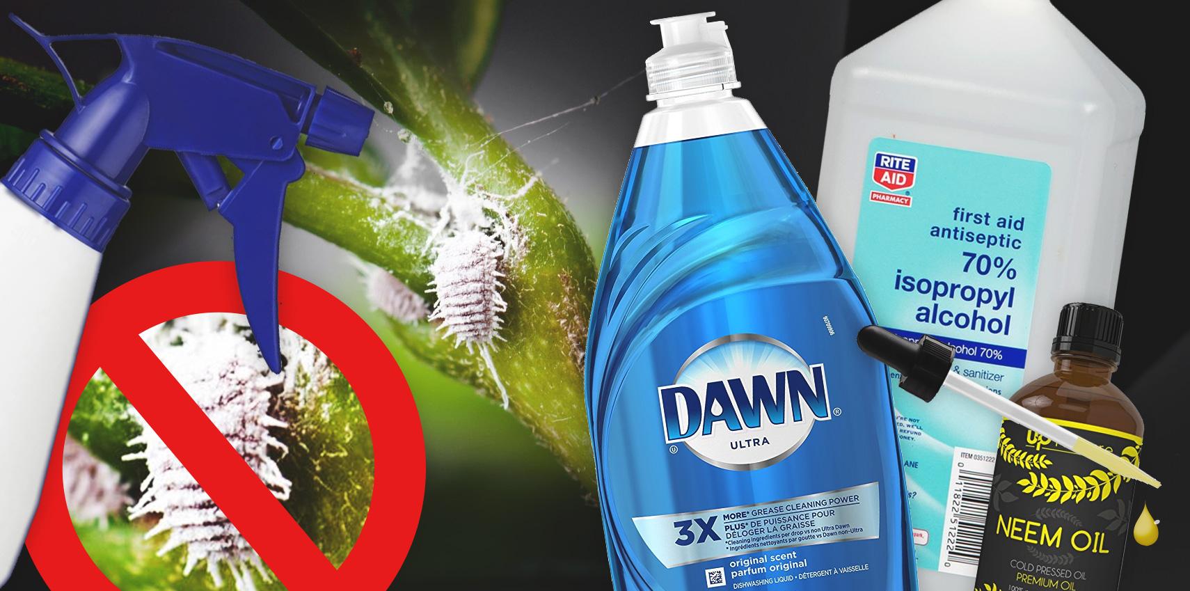 Pesticide Recipe The Best Bug Killing Mix For Mealybugs